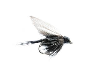 Black gnat #14