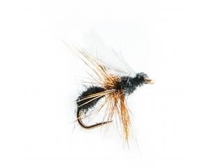 Black Ant #14