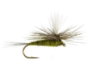 Olive Dun Parachute